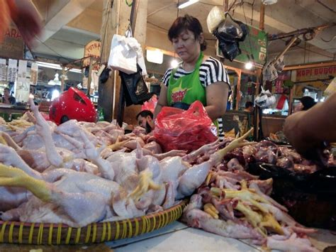 Bibit Ayam Di Lung harga ayam jatuh pengusaha sepakat musnahkan 6 juta bibit