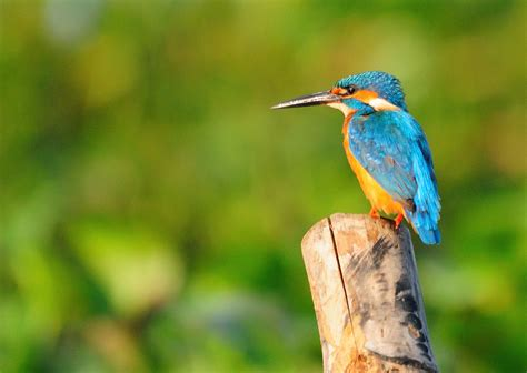 kumarakom bird sanctuary kerala the day trip to kuttanad