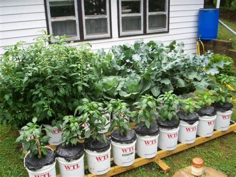 5 gallon container gardening 1000 images about my gardening this year on