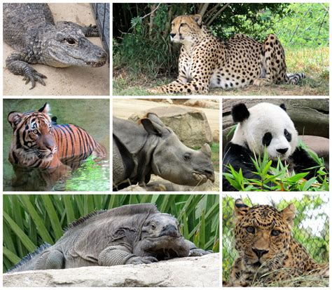 extinct breeds with endangered species monday what is the iucn