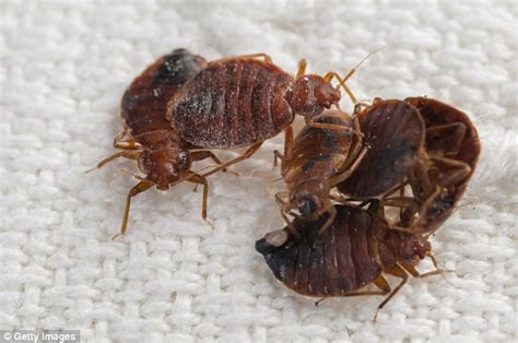 can bed bugs survive in water detroit man sets his body and apartment on fire trying to