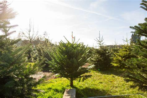best 28 wieso weihnachtsbaum weihnachtsdeko 25