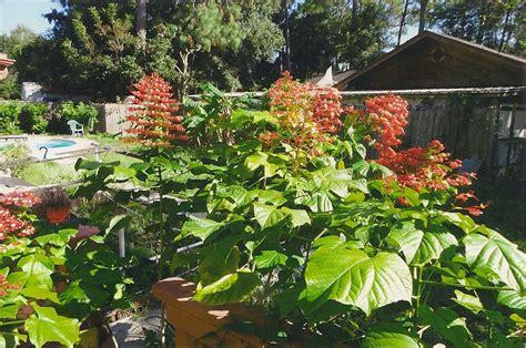 orange flowering shrub orange flowering plants larry s garden