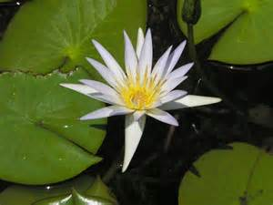 Lotus Pond Ta