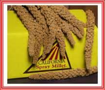 Sprei California Premium premium california spray millet laraine s gouldians