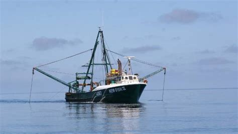 fishing boat death nz failure to report seabird and fish death commonplace in
