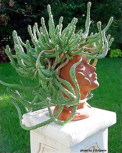 medusa planter medusa s head euphorbia perfect in a quot head quot planter lol