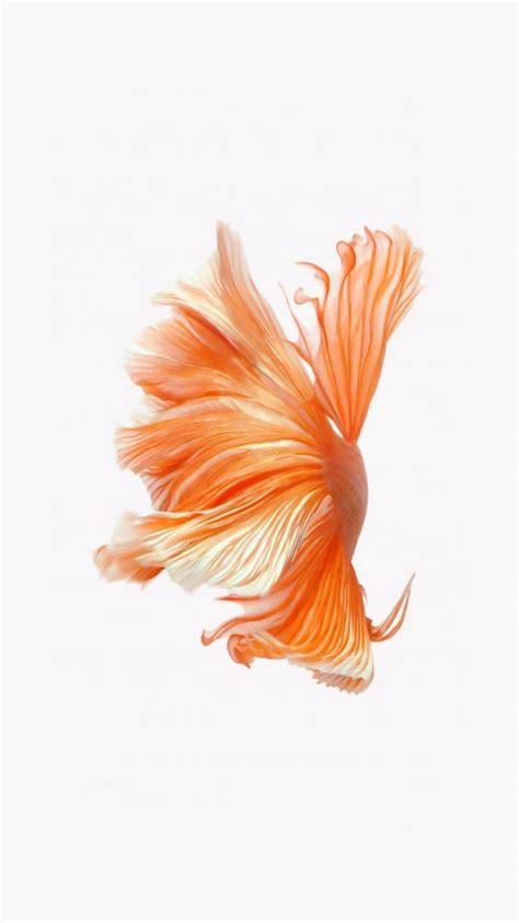 iphone live backgrounds fish live wallpaper ios 9 best hd wallpaper