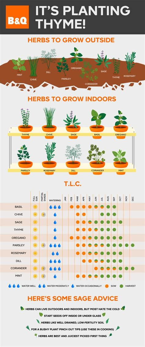 herb care chart best 25 herb wall ideas on pinterest kitchen herbs