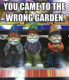 gnome memes funny gnomes images  pinterest