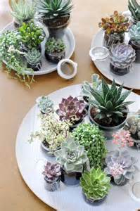 Beginner S Guide To Growing Succulents Garden - beginner s guide to the succulents plant trend ella s place