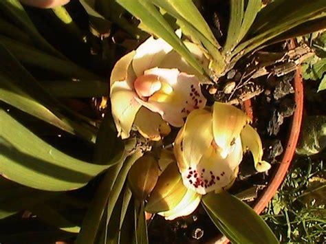 orchidea fiori orchidea fiori fiori