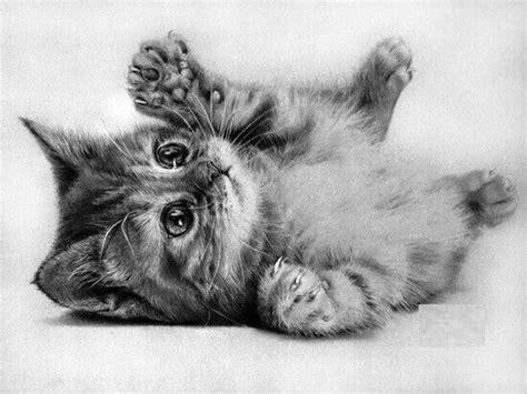 imagenes a lapiz de gatos los 10 mejores dibujos de gatos a l 225 piz
