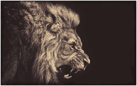 imágenes de leones para whatsapp descarga imagenes de leones para fondo de pantalla