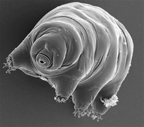 real monstrosities water bear