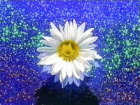 imagenes de flores gif 20 im 225 genes animadas de flores hermosas margaritas