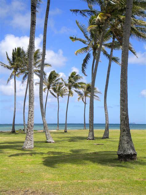 turisti per caso hawaii kailua oahu viaggi vacanze e turismo turisti per caso