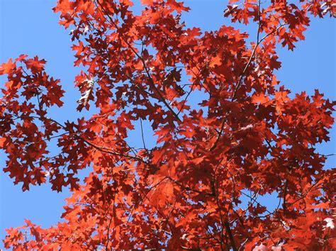alberi colorati da giardino alberi da fiore da giardino piante da giardino alberi