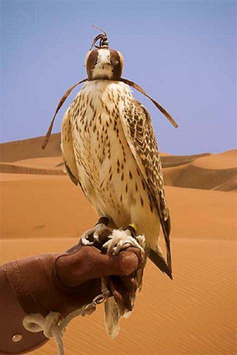 tipsimages stock photography bird species youtube animals pet birds