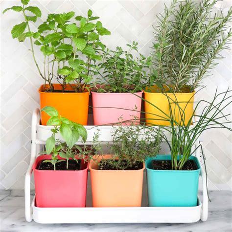 colorful indoor herb garden  beautiful mess