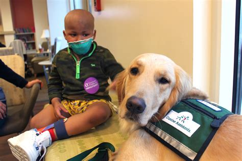 hospital dogs therapy dogs bring smiles to children s hospital patients today