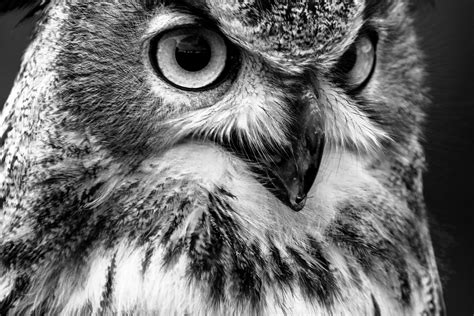 imagenes en blanco y negro de buhos fotos gratis naturaleza p 225 jaro ala en blanco y negro