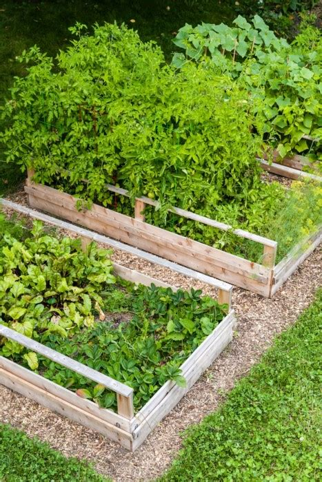turn lawn  raised garden beds garden therapy