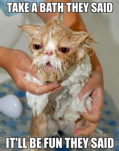 Wet Cat Meme - funny wet cat jokes memes pictures
