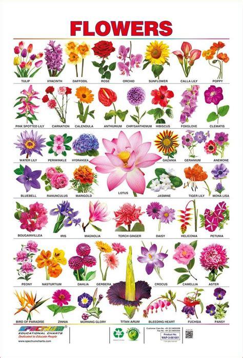 spectrum pre school kids learning laminated flowers