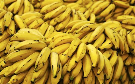 wallpaper bananas banana wallpaper 437071