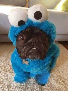 friends with the monster under my bed funny pugs on pinterest funny pugs pugs and dog memes