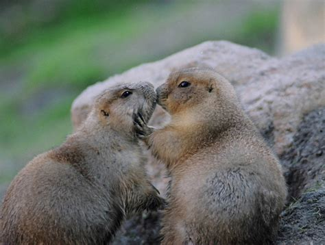 sweet cute animals kissing funny  cute animals