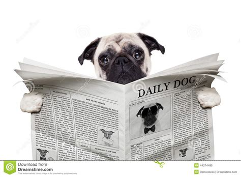 puppy news newspaper stock photo image 44274485