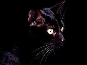 black cat wallpaper animal fond d 233 cran hd wallpaper hq