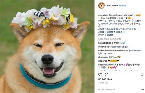 instagram dog are you following the 10 most famous dogs of instagram