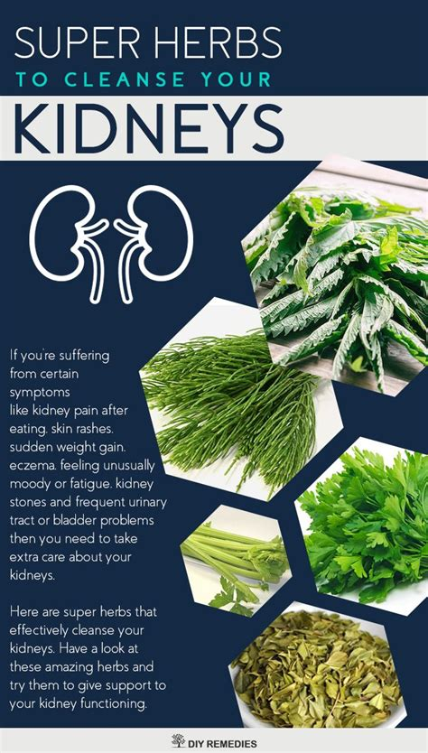 Left Kidney Detox by 10 Ideas About Kidney Detox On Kidney Cleanse