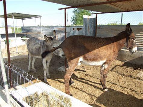 burros con yeguas burros cojiendo con lleguas auto design tech