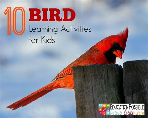 10 bird learning activities for kids