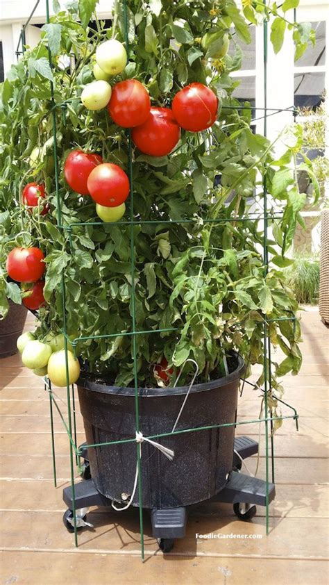 Planter Size For Tomatoes by Container Vegetable Garden On Your Patio Gardencus