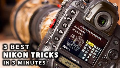 These Are the 3 Best Camera Settings for Shooting Wildlife