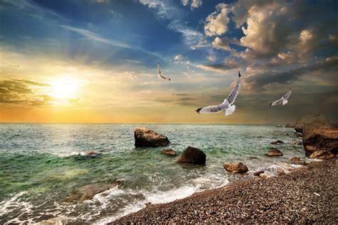 imagenes windows 10 paisajes gaviotas volando sobre la costa 80843