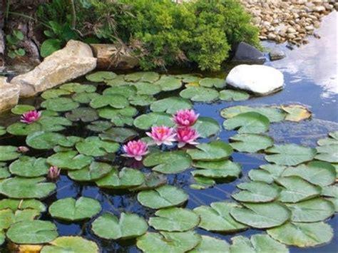 fiori acquatici nomi giardino con acqua progettazione giardini