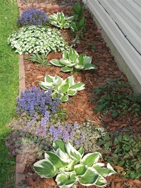 best plants for west side of house 17 best images about north facing garden on pinterest gardens plants that like
