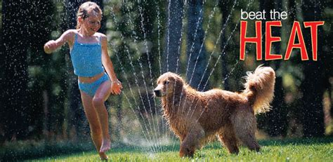 how to keep dogs cool outside outdoor safety keep your cool in the heat