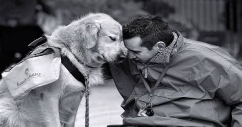 best emotional support dogs 17 best images about emotional support on psychiatric services