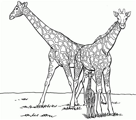 giraffe coloring pages pdf download family giraffe coloring for kids or print family