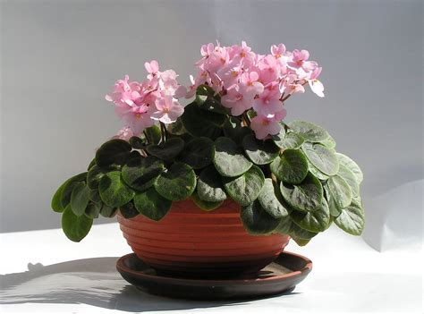 indoor house plants for sale houseplant wikipedia