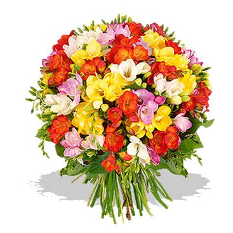 fiore con la s italia in fiore invia fresie colorate