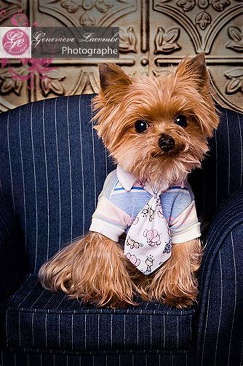 why is my yorkie throwing up adorable yorkie snickers i like you looking guys and so