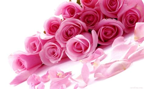 pink roses valentines day top 14 amazing valentines day wallpaper 2014 sevelina